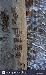 tree trunk bark names carve carved tim deb initials