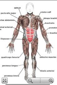 Google Human Anatomy Human Anatomy Pro Android Apps On Google Play