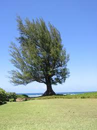 hawaii rental house kauai vacation rental accommodations in hawaii