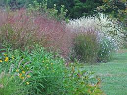 112 best planting with ornamental grasses images on