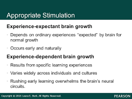 experience dependent brain growth infants children and adolescents ppt video online download