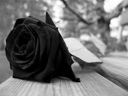 fun black rose dragon