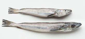 cuisiner le merluchon les poissons cuisine à l ouest