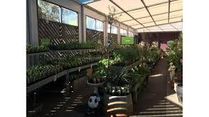 pink u0027s mitre 10 garden nurseries 281 main north rd clare
