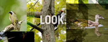 northern virginia birding u0026 bird identification fairfax county va