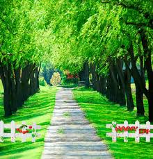 wedding backdrop green aliexpress buy green tree scenic outdoor 5x7ft