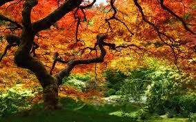 free autumn wallpapers for desktop wallpaper cave