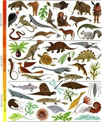 100 wildlife decorations home best online sources for