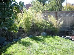triyae com u003d backyard bamboo garden ideas various design