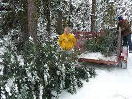 christmas tree lot truckee optimist