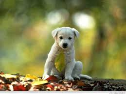Dog Wallpapers 30 Dog Picture Dog Wallpapers Winona Gammon