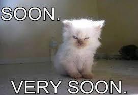 Soon Cat Meme - soon very soon memes hilarious pinterest memes grumpy cat