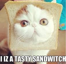 Lol Cat Meme - lolcat meme by jokeitup com