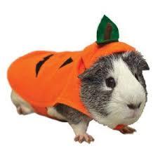 Hamster Halloween Costume U0027s Guac