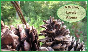 how to make scented pine cones youtube