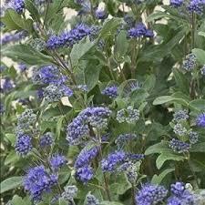 47 best garden plants images on pinterest garden plants gardens