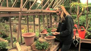 planting bulbs in pots how to plant ahead late summer and