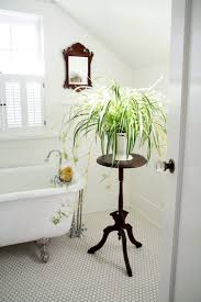 floor plant bathroom attractive cool spider plant for bathroom appealing