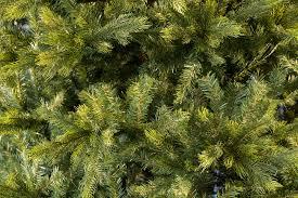 7ft grand fir life like artificial christmas tree hayes garden world