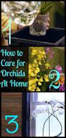 102 best home gardening indoor images on pinterest gardening