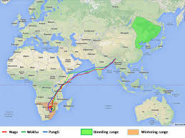 South African Airways Route Map by Tracking The Incredible Journey Of The Amur Falcon Conservation