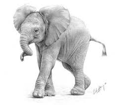 109 best elephants drawings images on pinterest elephant