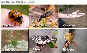 Backyard Buddies Insects