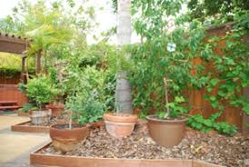 Potted Garden Ideas Container Garden Ideas Back Yard Projects For Edible Landscaping