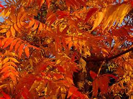 andrea doonan horticulture design fall color explained