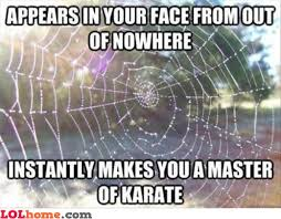 Funny Spider Meme Pictures To - ninja spider web funny pic