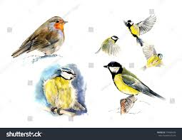 set birds robin blue great stock illustration 754506439