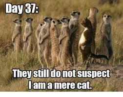 Mere Cat Meme - day 31 they still donotsuspect lama mere cat meme on me me