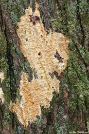 tree mold by deviantladyashley on deviantart