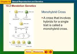 all grade worksheets mendelian genetics worksheet all grade
