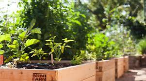 Raised Gardens For Beginners - raised garden bed kits minifarmbox garden planters