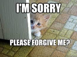 I Am Sorry Meme - i m sorry please forgive me sorry cat quickmeme