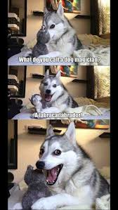 Pun Husky Meme - behind the meme everest the pun husky album on imgur