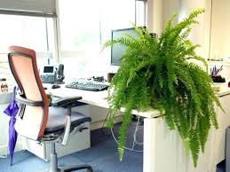 plantes pour bureau plante pour bureau plantes de bureau plante verte pour bureau plante