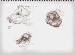 animal anatomy studies fiddzydesign concept art