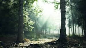wallpaper tumblr forest enchanted forest backgrounds wallpaper cave