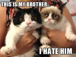 Original Grumpy Cat Meme - the best pictures of grumpy cat