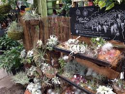 house interior plants ricky u0027s flower market