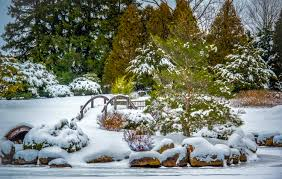 sushi winter garden part 19 japanese garden b w home design