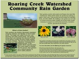 native plants for rain gardens columbia county water resource projects