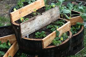 garden design garden design with uquot cedar half whiskey barrel