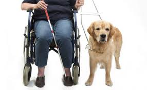 Comfort Pet Certification Quick Service Dog Certification National Service Animal Registry