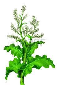 beige green tall green plant tall green plant with beige flowers photo tall