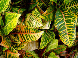 Tropical Plants Images - tropical plant check out the free plant identification mobile