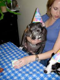 dog birthday party 9 easy tips for planning a dog birthday party the dog guide
