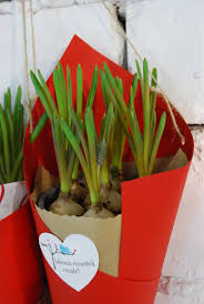 Flower Pot Wedding Favors - plant favors spring bulbs pot wrapping wedding favors plants